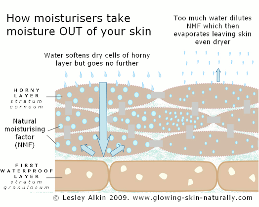 diagram: how mositurizers take moisture out of the skin